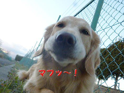 d_20130105112539.jpg