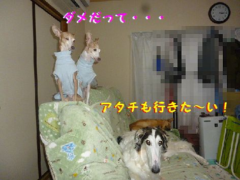d_20130205134228.jpg