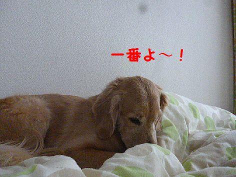 d_20130220075312.jpg