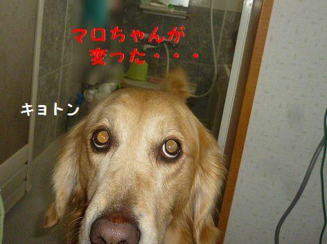 d_20130221075303.jpg