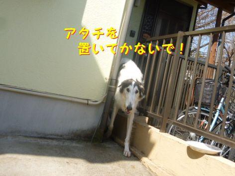 d_20130302101228.jpg