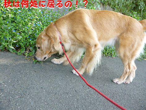 e_20120922080142.jpg