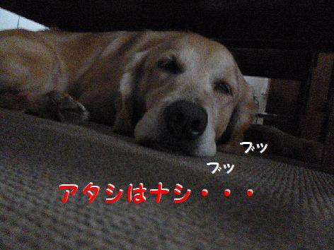 e_20121006075227.jpg