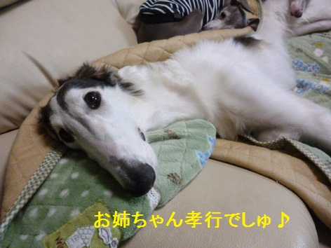 e_20121111082055.jpg