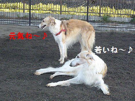 e_20121210075111.jpg