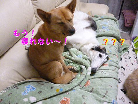 e_20130110075112.jpg