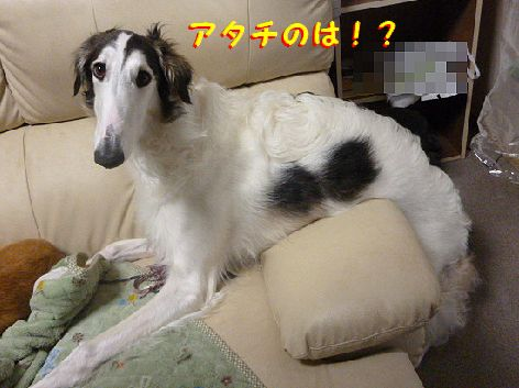 e_20130220075312.jpg