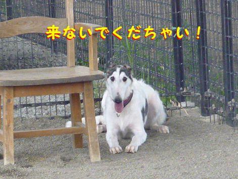 f_20120914081900.jpg