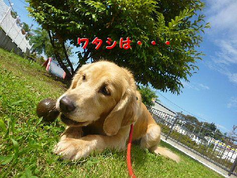 f_20120930080134.jpg