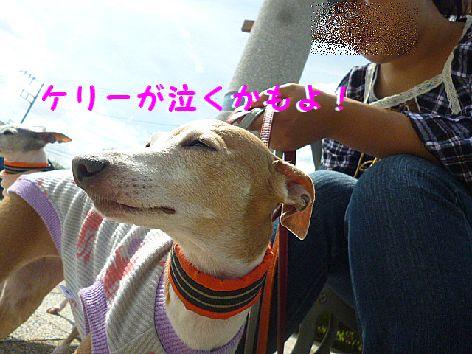 f_20121001072120.jpg