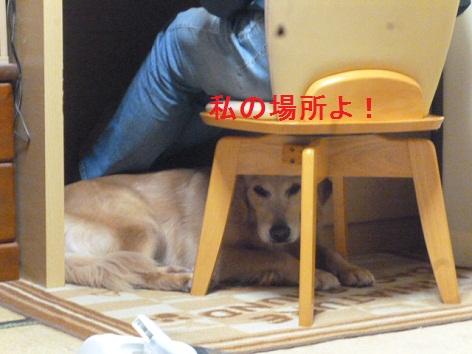 f_20121116074545.jpg