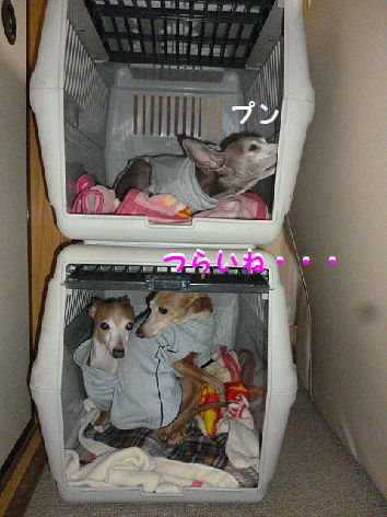 f_20121231100515.jpg