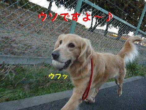 f_20130105112556.jpg