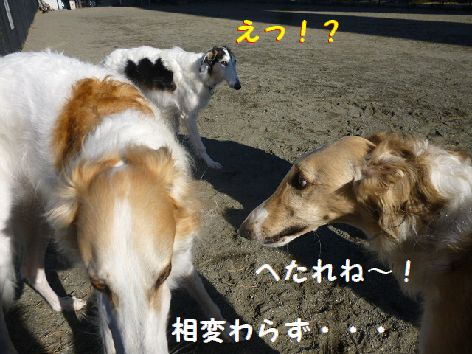 f_20130106102612.jpg
