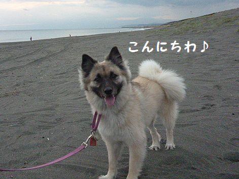 g_20121010073739.jpg