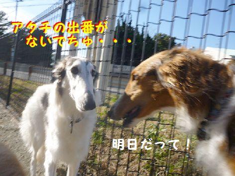 g_20130105112555.jpg