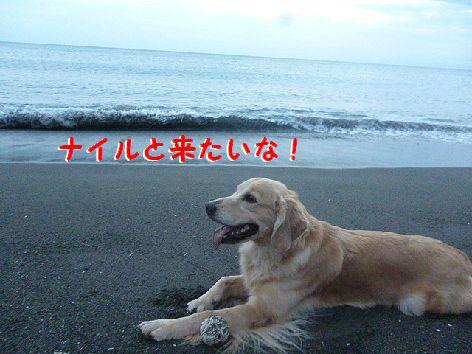 h1_20121010073738.jpg