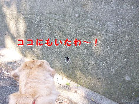 h_20120922080205.jpg
