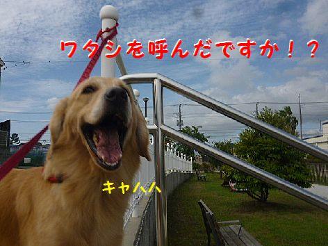 h_20121001072214.jpg