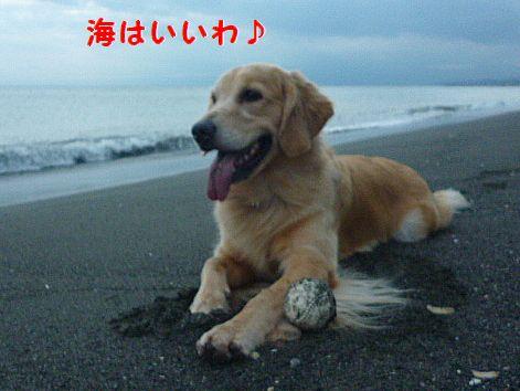 h_20121010073738.jpg