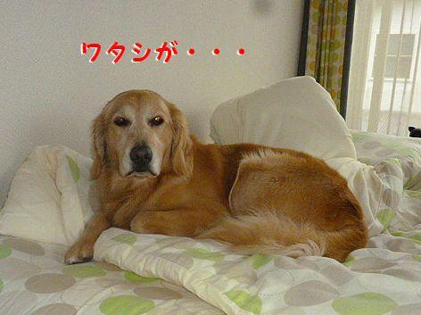 h_20121231100535.jpg
