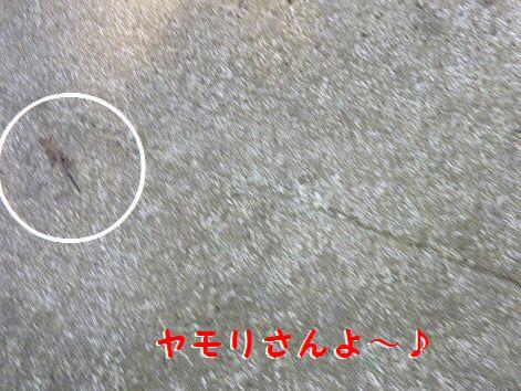 i_20120922080205.jpg