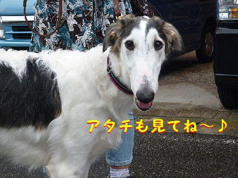 i_20120926073453.jpg