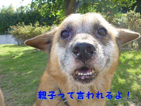 i_20120928074324.jpg