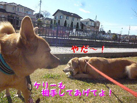 i_20121216103929.jpg