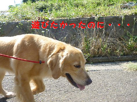 j_20120922080205.jpg