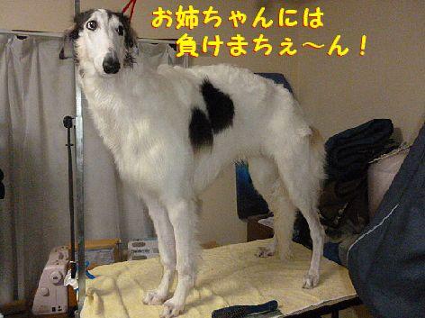 j_20121231100534.jpg