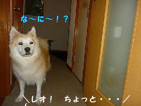 l1_20121018074845.jpg