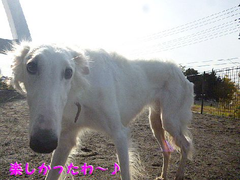 m_20121210075150.jpg