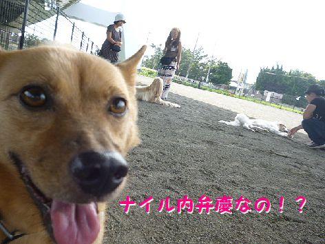 n_20120914081944.jpg