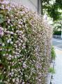 かべに野の花