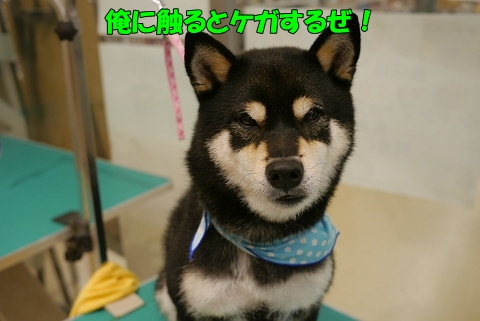 2012.10.22黒柴