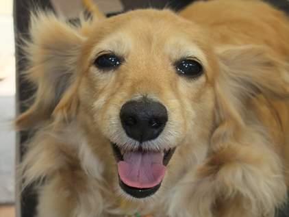 retyのマターリ犬バカな日々-ダックス