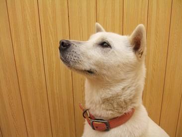 retyのマターリ犬バカな日々-紀州