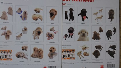 retyのマターリ犬バカな日々-カレンダー