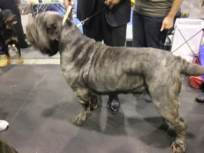 retyのマターリ犬バカな日々-シャーペイ