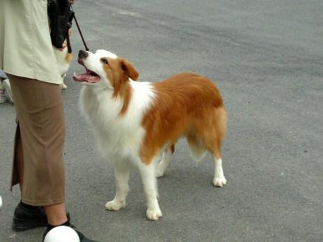 retyのマターリ犬バカな日々-ボーダー