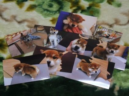retyのマターリ犬バカな日々-写真