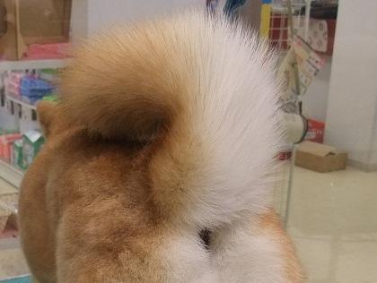 retyのマターリ犬バカな日々-尻尾