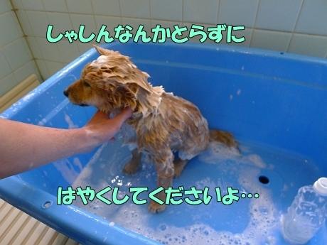 retyのマターリ犬バカな日々-シャンプー