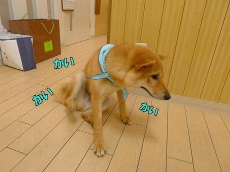 retyのマターリ犬バカな日々