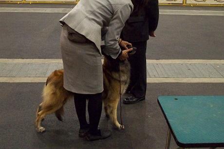 retyのマターリ犬バカな日々-ベルジアンタービュレン