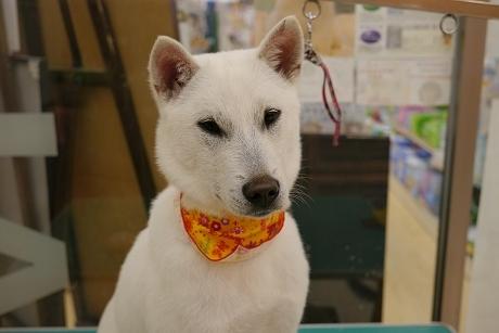 retyのマターリ犬バカな日々-紀州犬