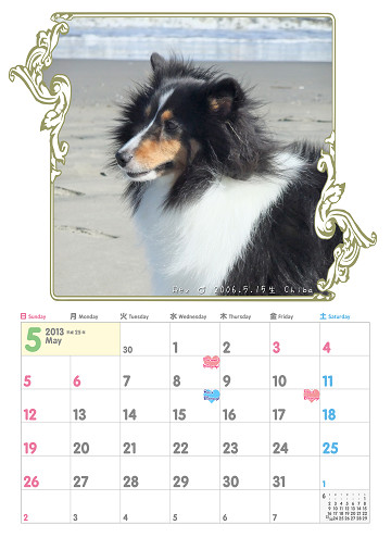 sシェルティカレンダー5月2013
