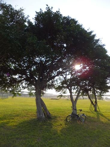 自転車11