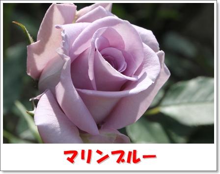 H_IMG_7560.jpg
